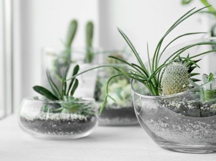 Como fazer um terrário: 3 passos para criar o seu micro jardim