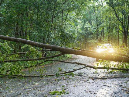 O seu seguro auto cobre riscos catastróficos? Saiba porque é importante