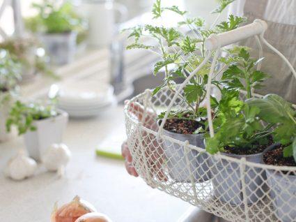 Saiba como fazer uma horta em casa com ideias bonitas, simples e baratas