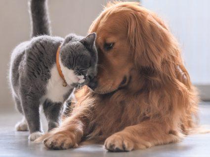 7 artigos essenciais para o seu animal de estimação