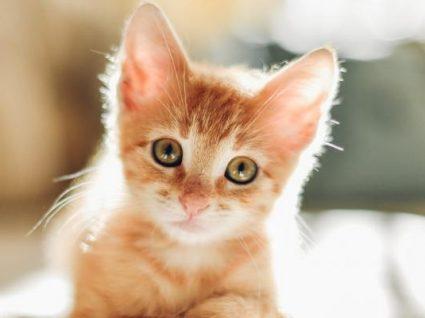 Nova lei: gatos vão ser obrigados a ter chip de identificação