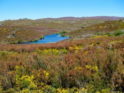 Parque Natural de Montesinho: férias no santuário da Natureza