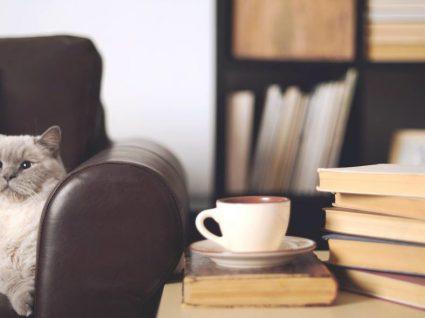O Pet & Tea chegou a Coimbra e é o novo cat café do país
