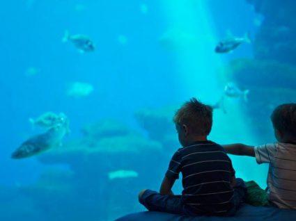 Semanas da sustentabilidade – Sea Life Porto quer sensibilizar miúdos e graúdos