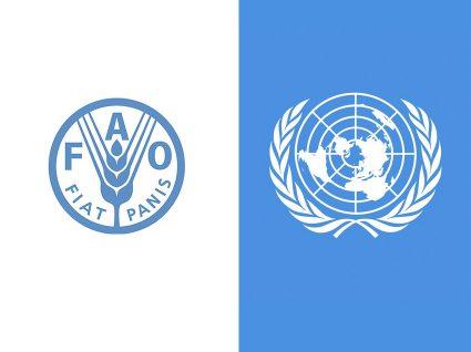 Quer estagiar nas Nações Unidas?