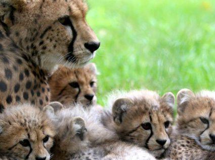 Em março há novas atividades no Jardim Zoológico