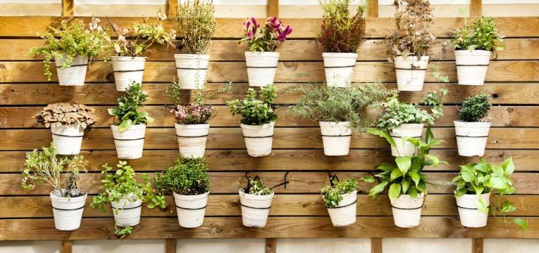 o que plantar numa horta vertical