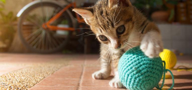 como educar um gato