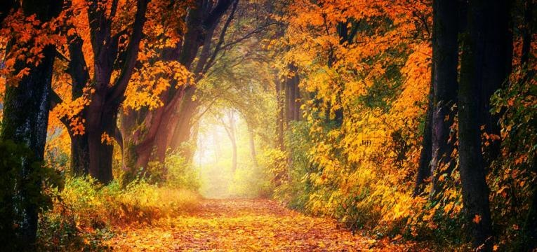 motivos para viajar no outono