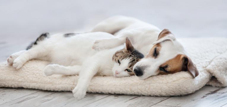 conheça os prós e contras de dormir com animais de estimação