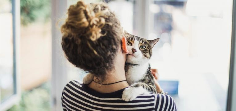 relaxamento é um dos motivos por que os gatos ronronam
