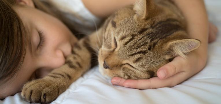 Há razões que explicam porque os gatos dormem tanto