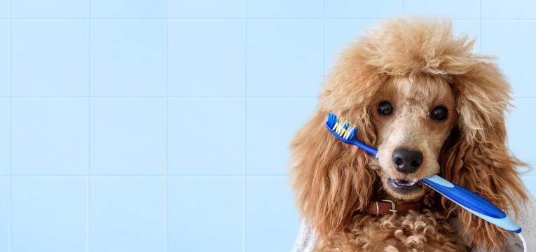 mau hálito dos cães
