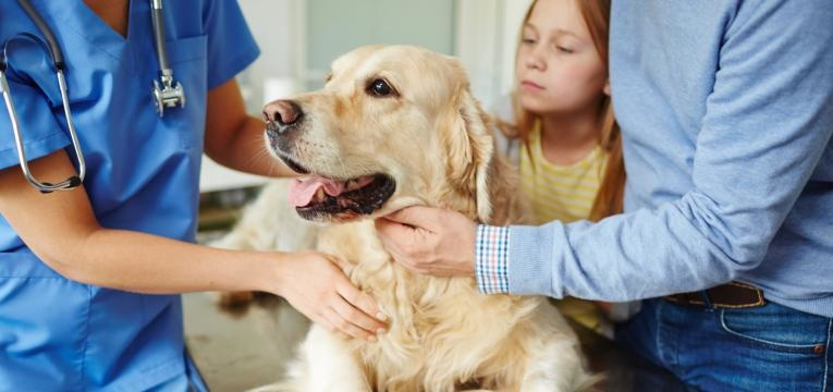 A raiva em cães é uma doença incurável