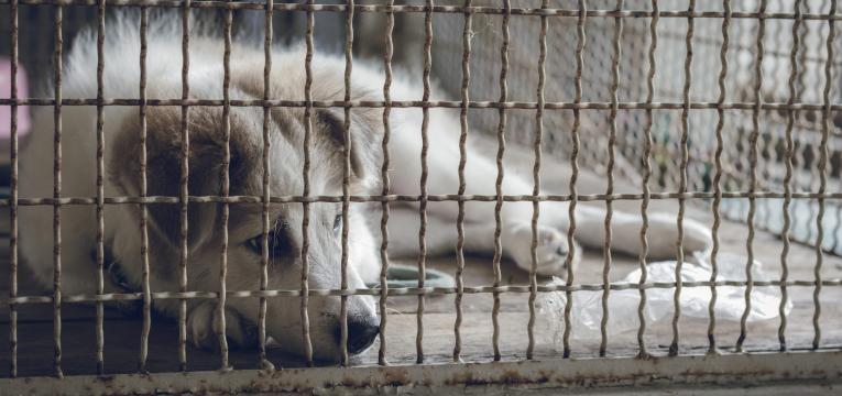 denúncia maus-tratos a animais