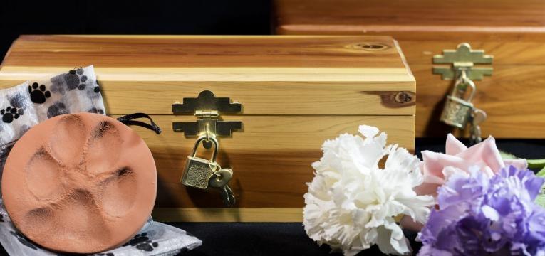 cremação de animais