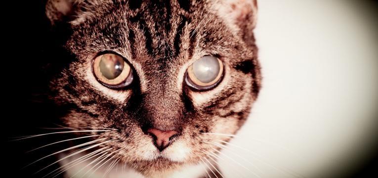 doenças dos gatos