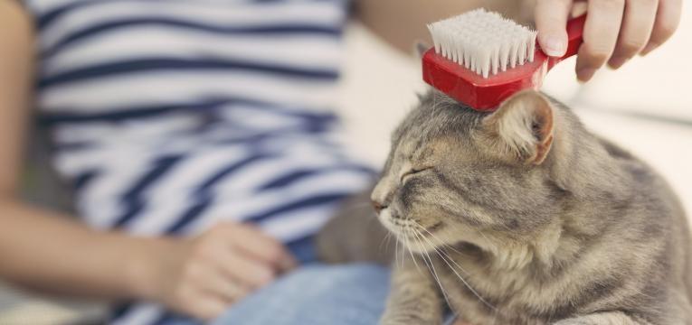 escovar o pelo do gato
