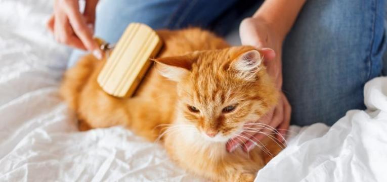 stress nos gatos