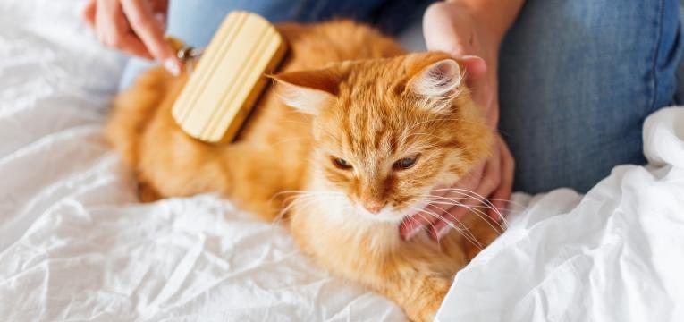 escovas para gatos