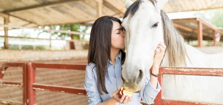terapia com cavalos