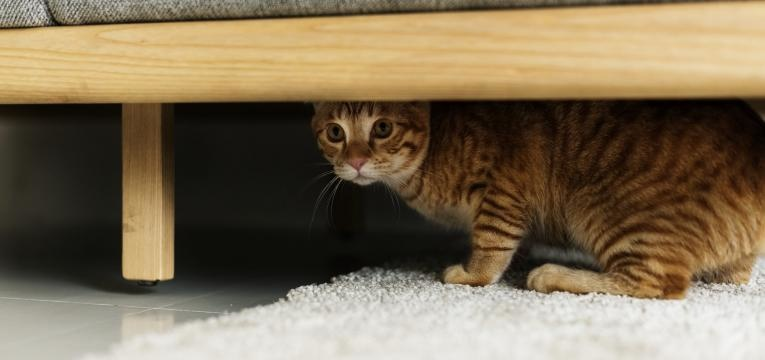gatos e esconderijos