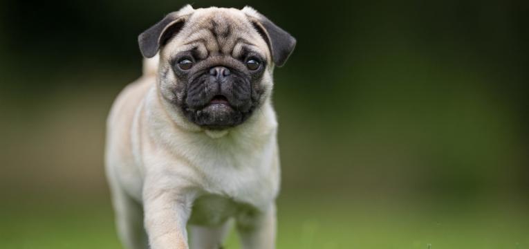 saiba tudo sobre os condroprotetores para cães