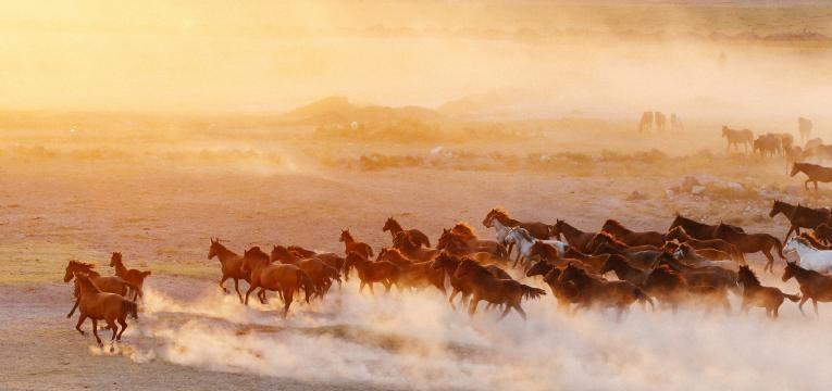 cavalos a correrem