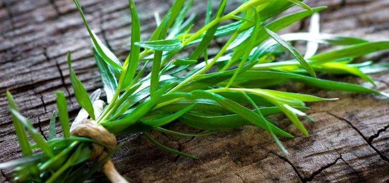 ervas aromatica estragao