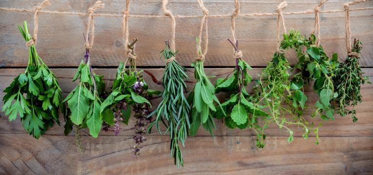 conjunto de ervas aromáticas expostas