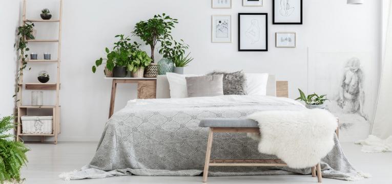 Ter plantas no quarto pode ter benefícios para a saúde
