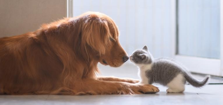 táticas para juntar cão e gato