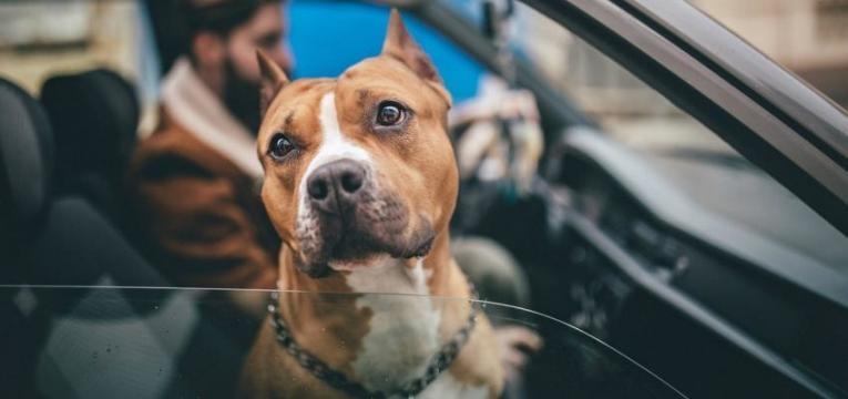 Há mais de 18.600 cães perigosos e só 300 donos têm formação obrigatória