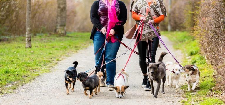 conheça opções de pet sitter