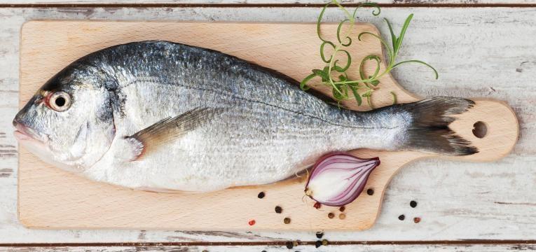 peixe cru é um dos alimentos que os gatos não podem mesmo comer