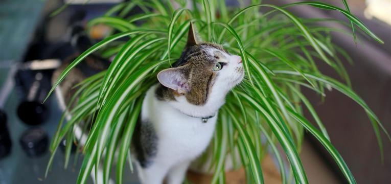 saiba quais são as plantas venenosas para animais