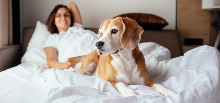 isto é o que tem de saber antes de adotar um cão