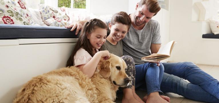 beneficos de conviver com animais
