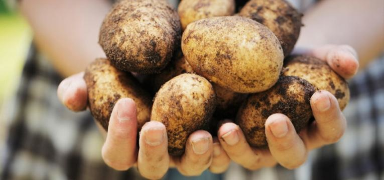 batatas potatoes