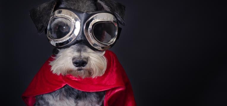 cão com superpoderes