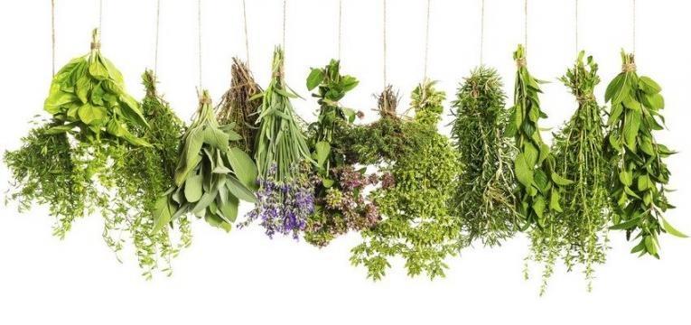 ervas aromaticas herbs