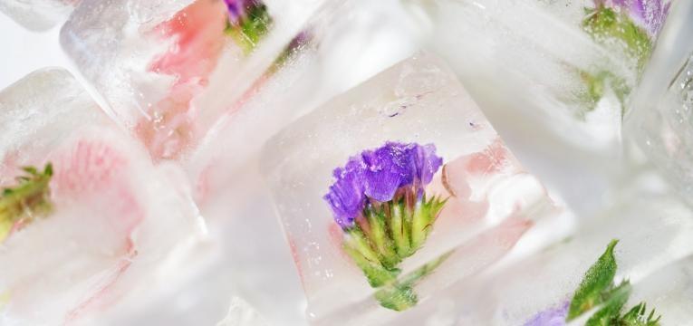 gelo com flores comestiveis