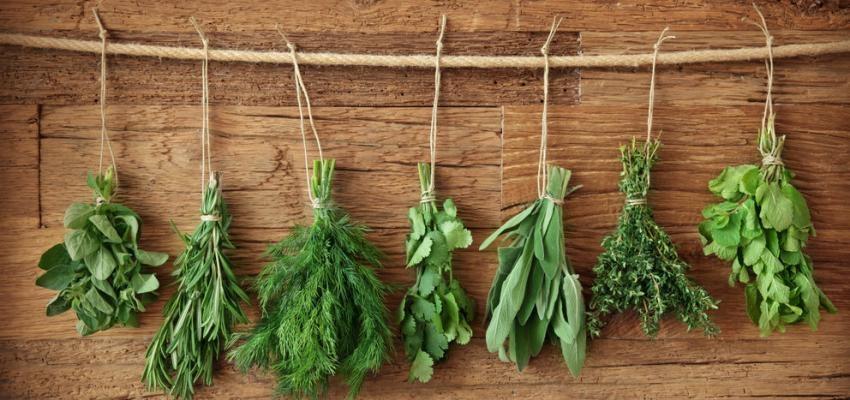 8 ervas aromáticas que podem ser cultivadas num frasco apenas com água