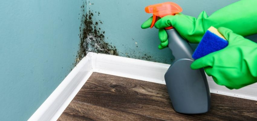 Tem paredes com humidade? Conheça as causas e soluções possíveis