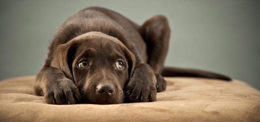 10 coisas que os cães odeiam (e que o dono pode evitar)