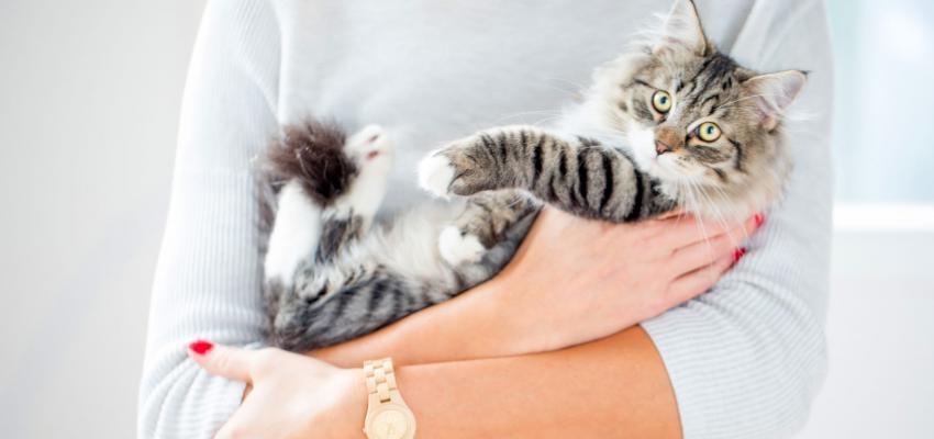 Resultado de imagem para site: e-konomista.pt gatos