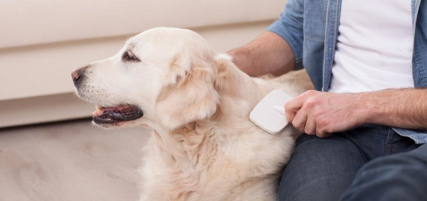 Como cuidar do pelo do cão e deixá-lo bonito e brilhante