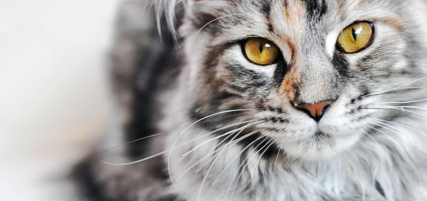 Personalidade do gato: 5 tipos para conhecer