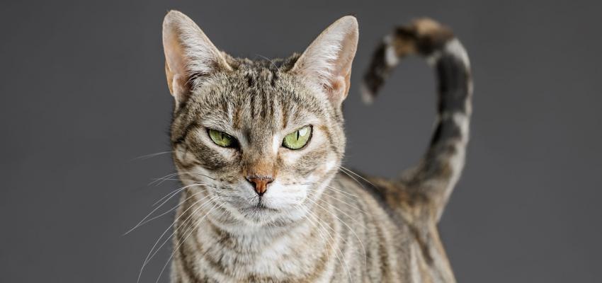 Resultado de imagem para site: e-konomista.pt saude dos animais gato