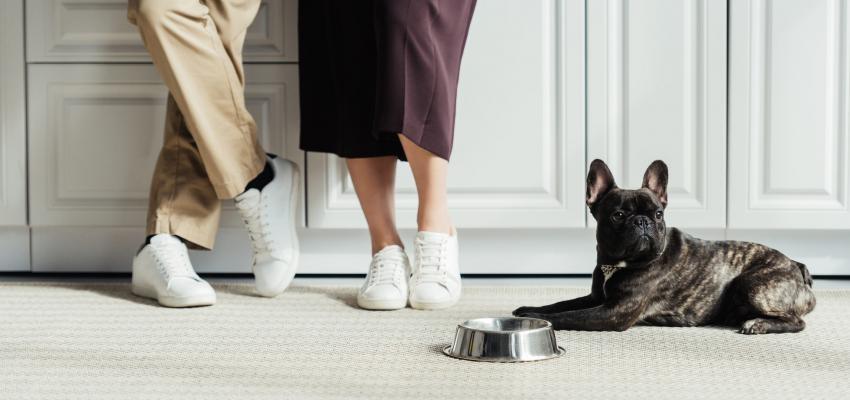 Os melhores cães para apartamento: 8 raças ideais para ter aí em casa